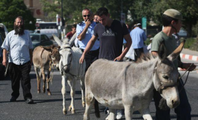 תמונות ממצעד הבהמות שנערך בצהרים בירושלים