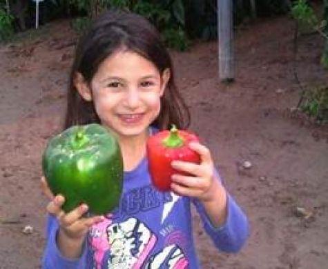 ארץ ישראל נותנת פירותיה בעין יפה: פלפל במשקל חצי קילו