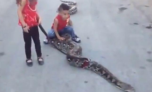 להיט ברמאללה: ילדים פלסטינים משחקים עם נחש ענק