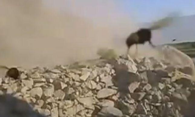 מטורף: הפיצוץ שהביא למתקפת זעם של צרעות