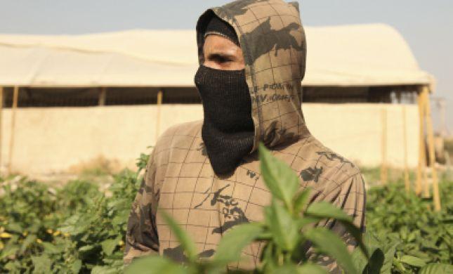 מחמירים את הענישה נגד גנבים בחקלאות