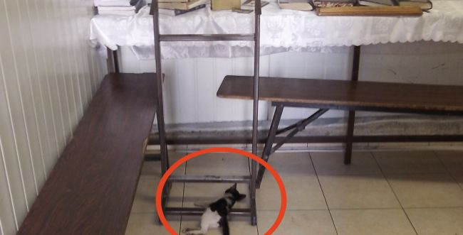 שפל בבני-ברק: פגרי חתולים בבית-כנסת