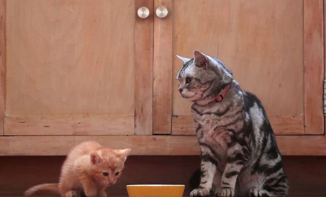 משעשע: כך אנחנו נראים בעיני החתולים שלנו