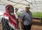 חדשות חרדים המסתערבים של המגזר החרדי בירדן