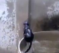 רץ ברשת, תרבות תיעוד משעשע: אתגר המים של החתול העקשן