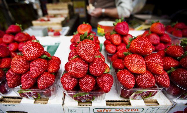 הדרכה הלכתית: איך מנקים תותים מחרקים?