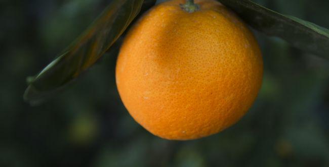 """סיפור מרגש לט""""ו בשבט: מעשה בתפוז בניכר"""