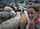 יהדות, על סדר היום על האכזריות של בני האדם שאסרו לשחוט כבשים