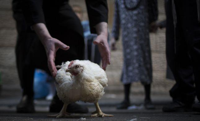 המאבק על התרנגול - מיומנו של צמחוני מומר