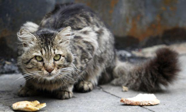 השמאל זועם: אריאל מציע טרנספר לחתולים