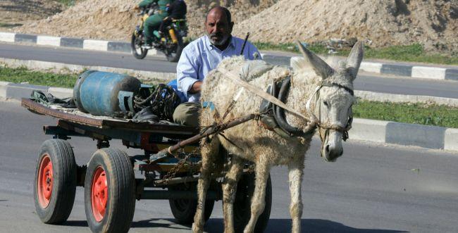 """הרשות מעלימה את נטישת הפלסטינים לחו""""ל"""