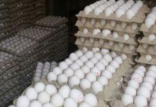 30,000 ביצים מזויפות נתפסו בדרך לחנויות בי-ם