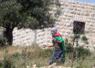 """חדשות, חדשות צבא ובטחון 9 פעילי שמאל נכנסו לרמאללה ונרגמו באבנים ובק""""תבים"""