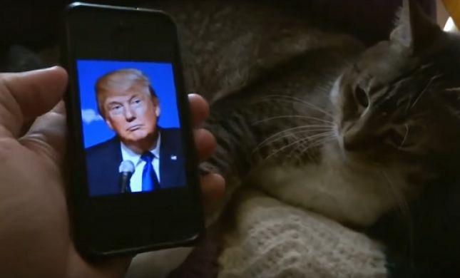 ויראלי: החיות ששונאות את דונלד טראמפ