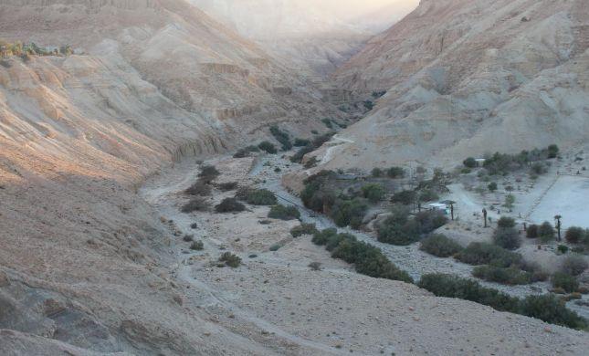 תלמידים ערבים יידו אבנים על תלמידים יהודים