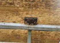 """כמעט פיגוע בעזה: כח צה""""ל ניטרל מטענים על הגדר"""