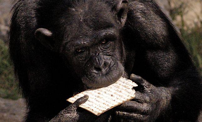 הספארי כבר מוכן לפסח: בואו לצפות בבעלי חיים