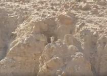 צפו: המרדף הנדיר במדבר יהודה שהפקח הספיק לתעד
