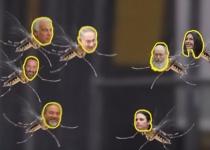 'נבזי': סערה ברשת בעקבות 'סרטון היתושים' של רוזנטל