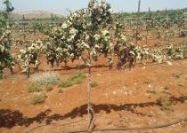 הטרור החקלאי: עוזרים לצביקי לשקם את הכרם