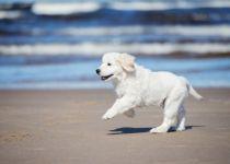 ידידו הטוב של האדם: צפו בכלב האמיץ שהציל חיים