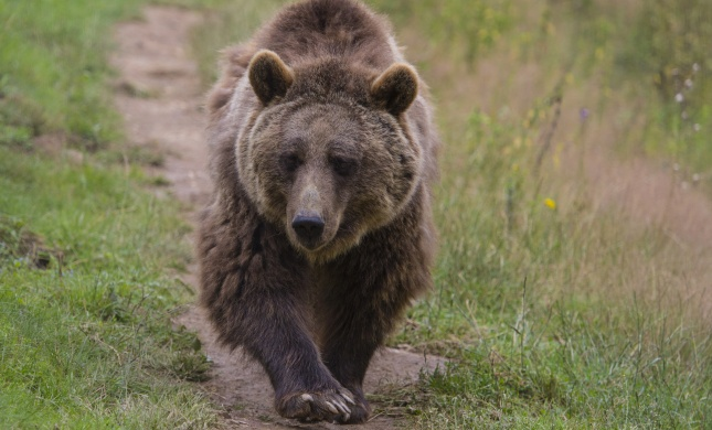 רומניה ושלושת הדובים: טיול חופשי בשכונה • צפו