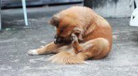 """שו""""ת יש לכם כלב – זהירות! אסור להוציא קרציות בשבת"""