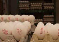 זהירות: חיידקי סלמונלה מזן אלים נתגלו במיליוני ביצים