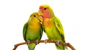 זוגיות, סרוגות בחנו את עצמכם • איזה מין זוג אתם: עורבים או יונים?