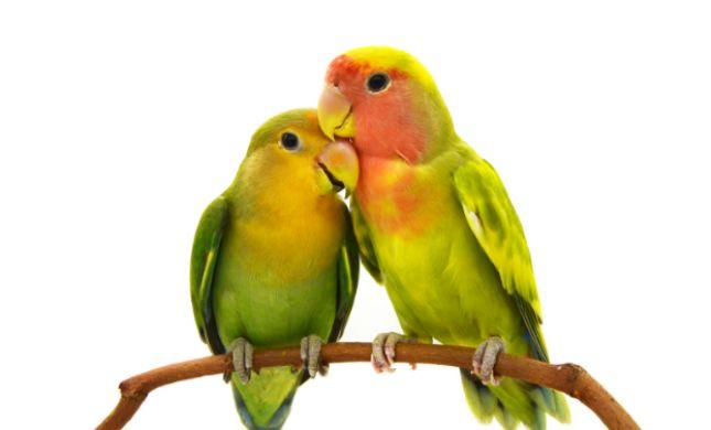 בחנו את עצמכם • איזה מין זוג אתם: עורבים או יונים?