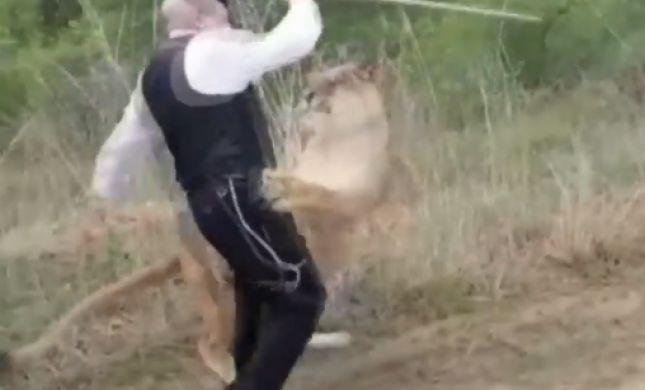 """יהודה משי זהב הותקף ע""""י לביאה ופונה לביה""""ח. צפו"""