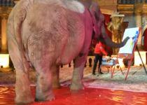 הפיל את השוק: פיל מוכר ציורים במאות דולרים
