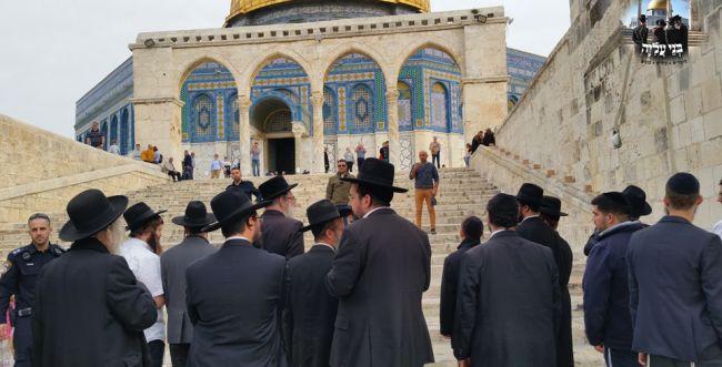 """עשרות חרדים עלו להר הבית לע""""נ הרב שטיינמן"""