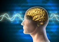 על זיכרון ועל טיפים לתרגול המוח
