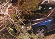 שטפונות, חסימת כבישים וקריסת עצים ברחבי הארץ