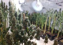 """עשרות ק""""ג של סמים נמצאו ביישוב בבנימין"""