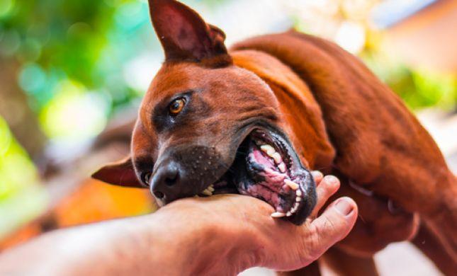 זוועה באופקים • 10 כלבים תקפו ילדה: איבדה הרבה דם