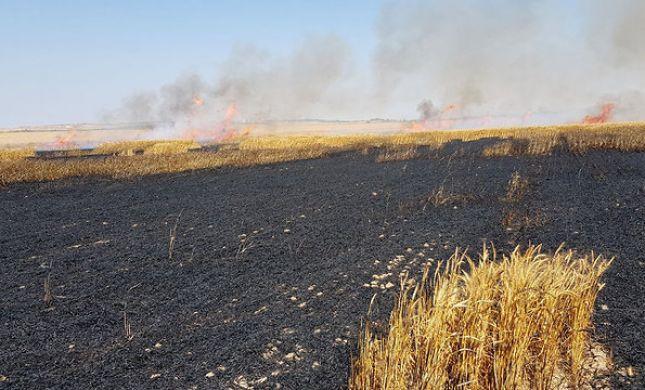 טרור העפיפונים: 100 דונם חיטה עלה באש