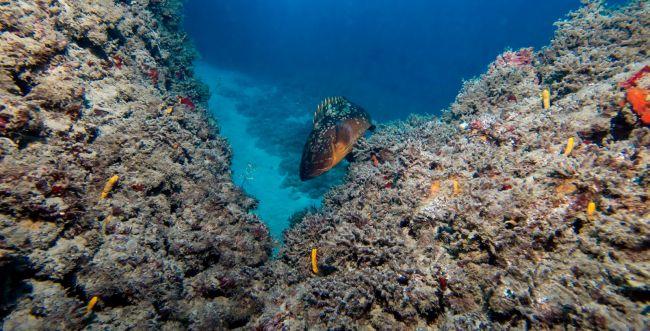 השר אלקין במהלך היסטורי להצלת הים התיכון