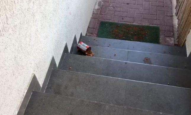 איתן כבל: זה מה שזרקו הלילה על הבית שלי. צפו