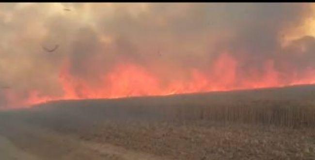 קטסטרופה בדרום: 9 שריפות במקביל בעוטף עזה