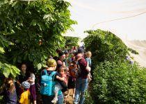 גלריה: עשרת אלפים איש בפסטיבל הדובדבנים