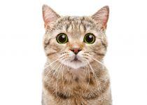 """שו""""ת: נראה תמים? החתול הוא הרוצח הכי חמוד בעולם"""