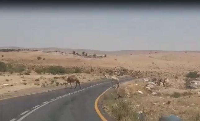 צפו: איום ממשי על חיי תושבי הר חברון