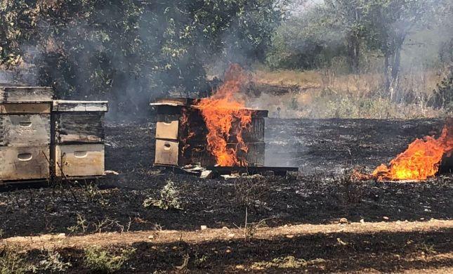 יותר מ-200 כוורות נשרפו בטרור ההצתות בעוטף עזה