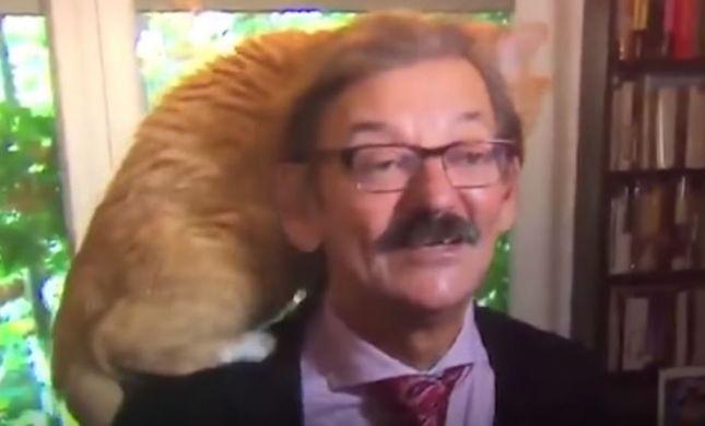 בשידור חי: חתול טיפס על ראשו של הפרשן המדיני.צפו