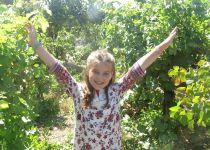 היסטוריית היין: פסטיבל הבציר בגוש עציון יוצא לדרך