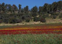 בחול המועד סוכות: קידום הבריאות יוצא לחיק הטבע