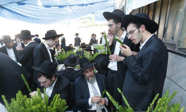 גלריה • 4 המינים ובניית סוכה: ההכנות לחג בירושלים