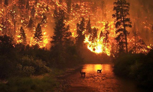 שריפת ענק בקליפורניה: לפחות 9 נהרגו בלהבות